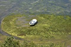 VARADA EN VERDE (C@RLOS.R) Tags: barca crlos castropol riaderibadeo rioeo asturias galiza mar baixamar algas verde bajamar