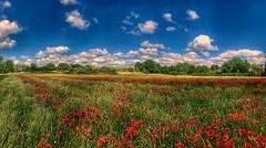Mohnfeld (Blende2,8) Tags: sky clouds trees swabiancountryside germany fields landscape schwabenland felder weizen iphone panorama blumen wolken himmel badenwürttemberg deutschland streuobstwiesen wiese mohnblüten mohn