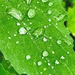 Nature details. (jessica.aieta) Tags: nature greenpower water details plants