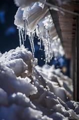 Bajo la cornisa (SantiMB.Photos) Tags: 2blog 2tumblr 2ig nieve snow tejado roof carámbanos icicles geo:lat=4239211087 geo:lon=216031580 geotagged fustanya cataluna españa esp