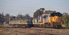 X50 and 8129 break the peace as they roll through Minyip on an empty grain (bukk05) Tags: x50 8129 xclass 81class railpage:class=17 railpage:loco=x50 rpauvicxclass3 rpauvicxclass3x50 g26c emd16645e emd16645e3b wimmera world wagons wheat winter explore export engine emd electromotivediesel railway railroad railpage rp3 rail railwaystation railwaystations train tracks tamron tamron16300 trains yard yarriambiackshire yarriambiack photograph photo pn pacificnational loco locomotive jt26c2ss horsepower hp grain graincorp flickr freight diesel dieselelectriclocomotive station standardgauge sg australia artc 2017 zoom canon60d canon clyde clydeengineering victoria vr victorianrailway vline victorianrailways minyip