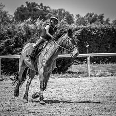 Chris : Super l'équitation... à Laurane, Seysses (BO31555) Tags: bernard ondry seysses hautegatonne noir et blanc blackwhite equitation midipyrénées blanco y negro laurane hautegaronne blackwhitenoiretblanc 2017 cheveaux 09 cheval chevaux bêtes blackandwhite 09ariège chris monochrome bw blancoynegro bernardondry noiretblanc occitanie france fr