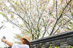 DSC_4437 (Frankie Tseng (法蘭基)) Tags: yms taipei taiwan flower flowers nikon cherryblossoms summer spring 2017 abstract blur bw bwphotography blackwhite yangmingshan 台北 櫻花 陽明山 台灣 抽象