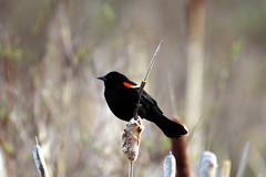 IMG_6607 (vipermikey) Tags: banff banffnationalpark bird alberta canada canadianrockies vermillionlakes hike rockies rockymountains parkscanada nature mountains