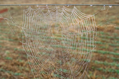 Spider web art - Pendleton SC (DT's Photo Site - Anderson S.C.) Tags: tamron 2875 lens andersonsc pendleton upstate spider webs dew rain fog pasture damp southern america landscape insect