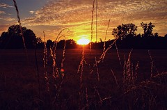 Take A Step Back. (god_save_the_green) Tags: sunset dreamscape landscape sun clouds orange red nuages july2017 trees shadows ombres coucherdesoleil colourful countryside field yellow mathildeaudiau olympusepl1 bird peaceful
