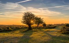 Hot Day Ahead (nicklucas2) Tags: newforest sun sunrise tree path flare green heather shadow landscape