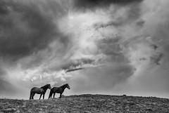 Stolovi (Djordje Petrovic) Tags: horse mountain tokina1224mm tokina tokinalens serbia srbija sky clouds nature nikon nikond80 blackandwhite bw monochrom