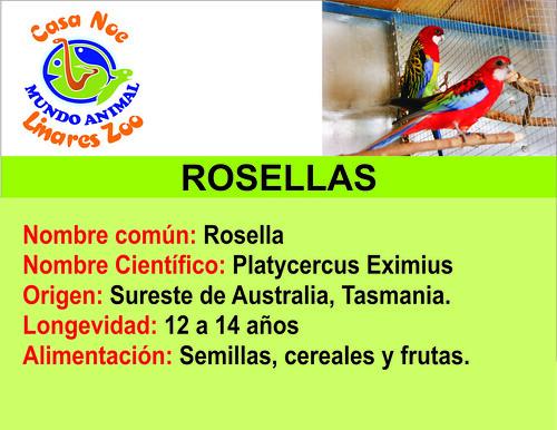 Rosellas