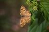 Borboleta (Carlos Santos - Alapraia) Tags: borboleta butterfly insecto flor natureza nature ngc ourplanet animalplanet canon wonderfulworld highqualityanimals