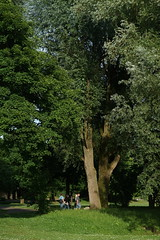 grow up (Amselchen) Tags: tree plants park season summer people blackandwhite bw monochrome mono sony alpha7 sonyilce7 samyang 85mmf14