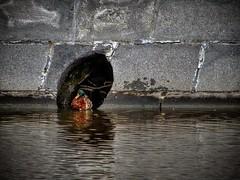 #duck #moscowducks #river #yauza #water #city #moscowriver #mymoscow #mytown #cityducks #stream #утка #московскаяутка #река #яуза #вода #сити #московскаярека #моямосква #мойгород #городскиеутки #течение Московская утка в московской реке. (borisp2) Tags: mytown river сити city течение mymoscow яуза вода moscowducks река water московскаяутка мойгород cityducks московскаярека утка stream moscowriver городскиеутки yauza моямосква duck
