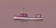 Seeking Peace (Rennett Stowe) Tags: boat boats peace tranqui tranquility peaceful water lake pruple purple purpleboat pleasurecraft relaxing relax handpainted cheappaintjob badpaintjob fog lakefog boatfog boatinthefog scotland scottishhighlands tiedup mooring mooredboat redpurpleandwhite lonelyboat lonely ship sad depression depressed languish lomond still stillness quiet peaceandquiet silence silent uk highlands oldboat handmadeboat resting rest outofservice stopped coolweather foggy movieboat filmlocation boatusedinmovies throughthefog treasure lochlomond lakelomond creativecommons