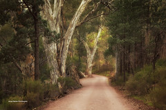 Walking Trail (Jacqui Barker Photography) Tags: flindersranges wilpenapound windingroad walkingtrack australia australianoutback southaustralia southaustraliaoutback southernhemisphere gumtree daytime landscape australianlandscape