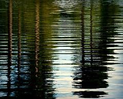 Evergreen (barbara_donders) Tags: water reflection reflectie golvend waves groen bomen trees zomer summer prachtig mooi beautifull magical nature natuur