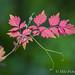 Midsummer Foliage