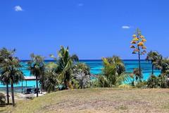 Eleuthera: Off the Reef (Ali Bentley) Tags: eleuthera eleutheraisland thebahamas bahamas island caribbean centuryplant canon