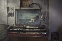 The Pheasant & Organist (andre govia.) Tags: abandoned andregovia decay decayed derelict organist organ pheasant photos photo decayedbuildings creepy bird urbex urbanexploration ue urbanexplorers