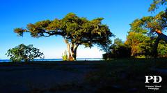 Verde (Pétruzz Ðias Fotografias) Tags: pelotas praia paisagem sol azul balneáriodosprazeres riograndedosul rgs rs