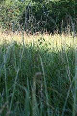 Canon EOS Rebel XTi 046 (bewaretheides) Tags: canoneosrebelxti
