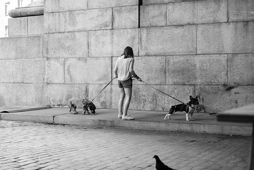 Dog Wrangler