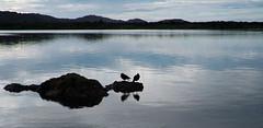 Ngunguru river (Wanda Amos@Old Bar) Tags: water river morninglight reflections silhouetts birds oystercatchers rocks newzealand
