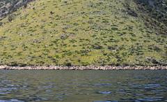 _XIS4697-333 (jozwa.maryn) Tags: brač croatia chorwacja adriatic adriatyk