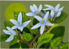 Blue Flowers (M.P.N.texan) Tags: art paint painting acrylic acrylics flower flowers blue original handpainted mpn