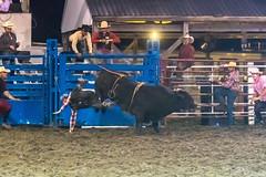 DSC_4384-Edit (alan.forshee) Tags: rodeo horse cow ride fall buck spin twirl bull stallion boy girl barrel rope lariat mud dirt hat sombrero