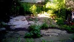 Growing in the cracks! (Maenette1) Tags: weeds growing cracks olddriveway trees menominee uppermichigan flickr365