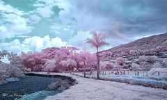 Infrared view Vayju Park Tulua_7 720nm (Luis FrancoR) Tags: infrared infraredpark infrarrojo nikonflickraward 720nm colombiainfrarred