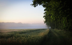 Summer Path (ursulamller900) Tags: sunrise sonnenaufgang landscape landschaft fog nebel canon kornfeld countryside