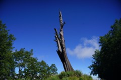 DSC07851 (rc90459) Tags: 最後的夫妻樹 夫妻樹 塔塔加 玉山