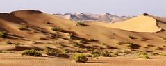 Intermediate dunes, Abu Dhabi, UAE (John's Love of Nature) Tags: johnkelley abudhabi uae desert dunes