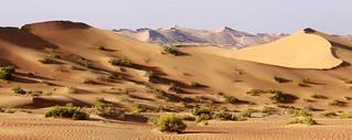 Intermediate dunes, Abu Dhabi, UAE
