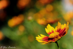 Windy Day In Paradise (Yuri Dedulin) Tags: 2017 arboretum closeup dedulin flora flowers frelinghuysen morristown nj nature newjersey outdoors plants summer yuridedulin beautiful blossom macro macroflowerlovers minimalism petal bokeh