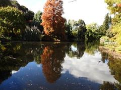 Adelaide Botanic Garden (set of 9) (Lesley A Butler) Tags: adelaide adelaidebotanicgarden australia autumn sa