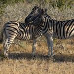 DSC07223 - NAMIBIA 2017 thumbnail
