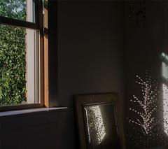 bedroom window :: 1 (dotintime) Tags: bedroom window tree greenery will angle slant light dark mirror glass crystal wire mood dotintime meganlane