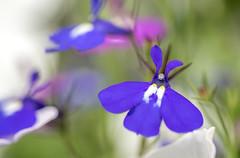 _DSC0204-1761 (SteveKenilworth2014) Tags: flower flowers blossom bugs bug summer