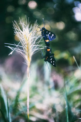Season of Love (Marta Marcato) Tags: butterflies butterfly bokeh hbw blur nature macro flora day dof walk digital couple love color colorful holiday insect nikond7200