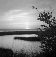 VRSA_entardecer (arhmoreno) Tags: lago lake natureza nature pôrdosol sunset kodak 125px mediumformat médio formato preto e branco blackwhite bw blackandwhite square 6x6 film filme analog analógico outdoor rollei travel travelphotography vrsa algarve vacation férias