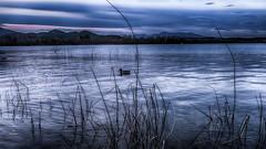 Pause ornithologique (Fred&rique) Tags: lumixfz1000 hdr photoshop raw espagne roseaux lac banyoles eau reflet canard crépuscule heurebleue paysage nature