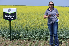 bayer-showcase-nd-17-136 (AgWired) Tags: bayer cropscience showcase plot tour 2017 soybeans canola wheat cereals corn north dakota agwired zimmcomm new media chuck zimmerman