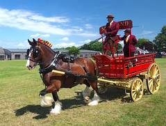 Sunday at The Kent County Show, Detling....archiving. (favmark1) Tags: sunday detling 2017 kentcountyshow