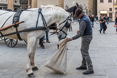 Horse Feeder (Nick Koehler Photography) Tags: rome venice florence travel travelphotography streetphotography street explore adventure siena photography passion people landscape cityscape city citylife