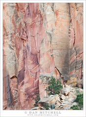 Juniper and Sandstone Cliff (G Dan Mitchell) Tags: capitolreef national park utah nature lanscape southwest sandstone juniper talus cliff trees usa north america