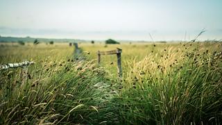 Wildes Moor Schwabstedt