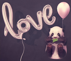 I <3 You Panda + TCF (♥ Stasey Oller ♥) Tags: black bantam stasey oller pink acid foil balloon balloons the chapter four 4 gacha baby panda