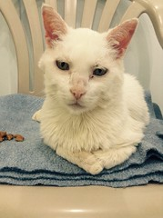 Bailey - 10 year old neutered male